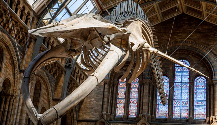 free museum in London. Natural History Museum.